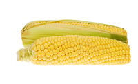 Kukuřice klas 1 ks